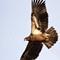 Teaneck Eagles27