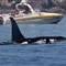 whale.2