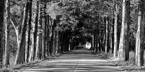 Trees__20x10