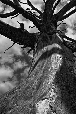 dead tree2