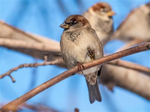 BirdsOf2012-47LR4