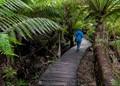 Tarra-Bulga National Park in South Gippsland, Australia