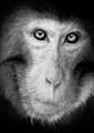 Monkey see.