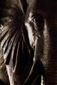 Auspicious Elephant