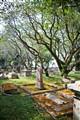 Penang Cemetery