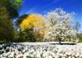Spring in Wisley Gardens.