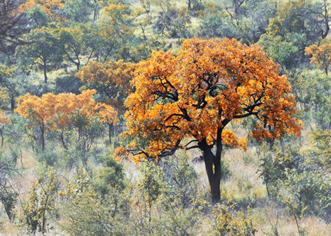 Tree Colour
