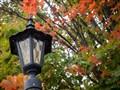 Fall-Street-Lamp-1