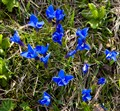 Real Blue Flowers