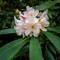 Nature Showing Off: OLYMPUS DIGITAL CAMERA
