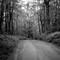 Road from Pine Hill to the Mt. Hope: Voigtländer 40mm Nokton f/1.2 VM