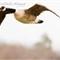 -13_March_river birds_439
