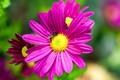 flower_dept_of_field