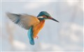 for just a few seconds this Kingfisher was hovering besides my car window....