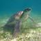 Turtle Canvas