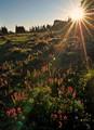 Morning sun light over flower field