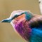 Zoo and Garden Aug-Sept 2015 (14 of 17)