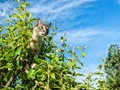 Kitty in Pear Tree