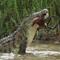 Crocodile DSC01973