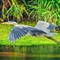 Great Heron 2017