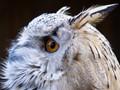 "Taken at the ""Falkenhof"" bird zoo situated on the Feldberg mountain in Hesse, Germany"