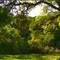 Oak shade 50095 1280w A