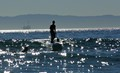 Seal Beach Paddle Boarder