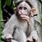 Monkey 03 a