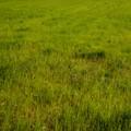 The grass is always greener