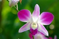 An Exotic Orchid