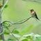 Birds2018-57sm: OLYMPUS DIGITAL CAMERA