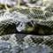 Burkett Lake and Vantage Reptiles-20160916-0015-Edit