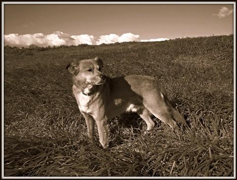 My dog.