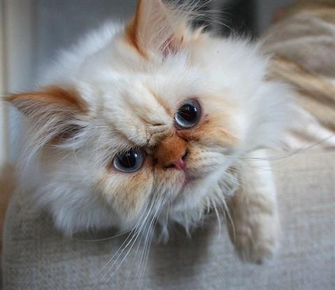 Simply kitten