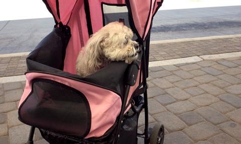 Doggie Stroller_R010069