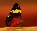 Butterfly at Guira Oga Bird Park