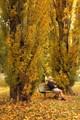 Under the poplars