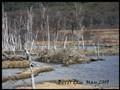 Bever dam May 2009