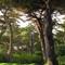 Villa Cypress ©2011 Derek Dean