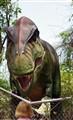 Jack Zoo 504