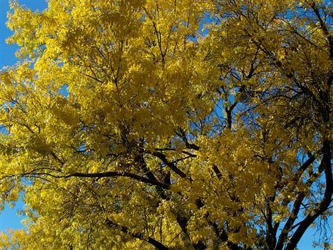 Autumn Tree Web