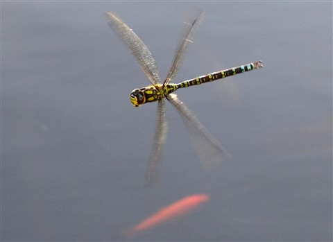 tilted dragonfly head horizontal