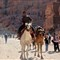 camels from petra - jordan
