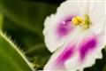 flower_july-1