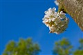 Spring sprang
