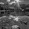 Bear Lake | Rocky Mountain National Park, CO | June, 2013