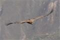 El condor pase