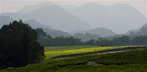 Africa_Rwanda_NyungweNatPk_0111_Colobus_-118