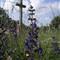 !!summer-PICT0243-Foltan-cross