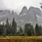 Yosemite Rain 17